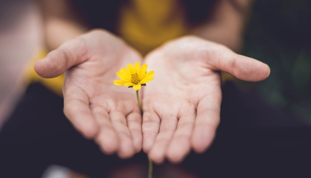 Person holding yellow flower in cupped hands